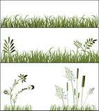 Grasses. Variety of grasses weeds and funky shapes Stock Photos