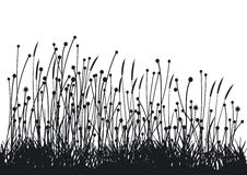 Grasses. Illustration isolated on white Royalty Free Stock Photography