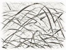 Grasses stock photography