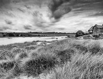 Grasses at Alnmouth beach Royalty Free Stock Image