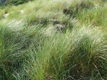Grasses of the Australian coast Stock Photo