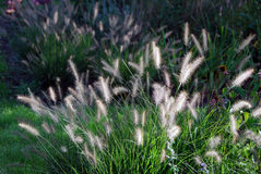 Grasses in autumn Stock Photos