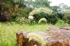 Grasses Royalty Free Stock Images