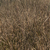 Grasses background Royalty Free Stock Photo