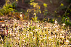 Grasses backlit by sun. Stock Photography