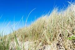 Grasses on beach dunes blue sky background Stock Photos