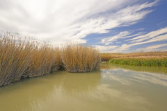 Grasses in a Beaver Pond. Along the Rio Grande River in Big Bend National Park in Texas Stock Image