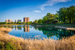 Grasses and buildings along Druid Lake, at Druid Hill Park, Balt Stock Photography