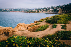 Grasses on a cliff and view of the Pacific Ocean  Stock Photos