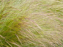 Grasses, details. Textures in a garden grass clump stock photography