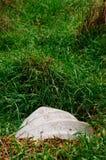 Grasses Stock Photo