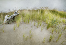 Grasses and driftwood Stock Photo