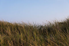 Grasses on dune Royalty Free Stock Photos