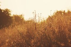 Grasses in field Royalty Free Stock Image