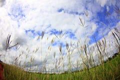 Grasses flower in the sky Stock Photo