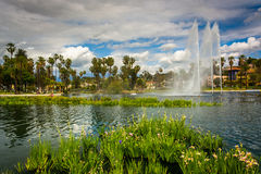 Grasses and a fountain in Echo Park Lake  Stock Photography
