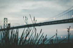 Grasses in front of modern suspension bridge Stock Photos