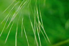 Grasses in green Royalty Free Stock Image