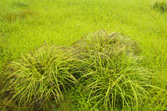 Grasses and groundcover in field. Stock Photo