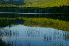 Grasses growing in a calm lake with reflections at sunset Stock Photo