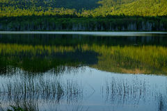 Grasses growing on a calm reflective lake with mountain and tree royalty free stock photos