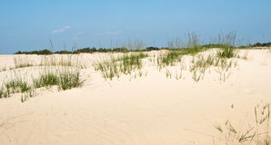 Grasses growing in a dune landscape in summertime Stock Images