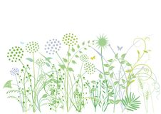 Grasses and herbs. An illustration of green grasses and herbs on white background stock illustration