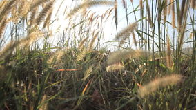 Grasses and lake view stock footage