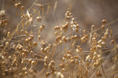 Grasses natural background Royalty Free Stock Photography