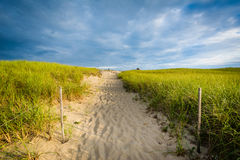 Grasses and path over sand dunes at Race Point, in the Province Royalty Free Stock Photos