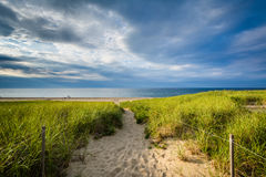 Grasses and path over sand dunes at Race Point, in the Province Stock Photography