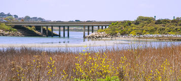 Batiquitos Lagoon, San Diego County, California. The grasses, plants and flowers of the wetlands of Batiquitos Lagoon, in Carlsbad, San Diego County, looking out stock photos