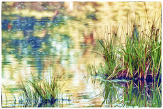 Grasses and Reeds with Lake Reflections Royalty Free Stock Photo