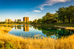 Grasses and reflections in Druid Lake, at Druid Hill Park, Balti Royalty Free Stock Images