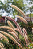 Grasses on the roadside Stock Photo