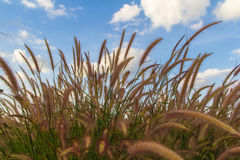 Grasses on the roadside Royalty Free Stock Image