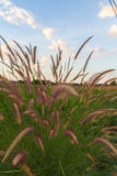 Grasses on the roadside Royalty Free Stock Photos