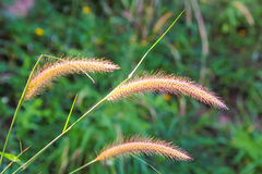 Grasses on the roadside Royalty Free Stock Photography