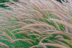 Grasses on the roadside Royalty Free Stock Images