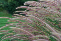 Grasses on the roadside Stock Image