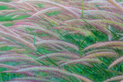 Grasses on the roadside Stock Photography