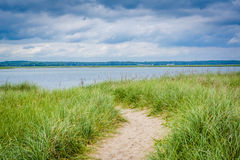 Grasses and sandy path at Hampton Beach, New Hampshire. Royalty Free Stock Photography