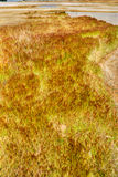 Grasses and sedge bake in the sun Royalty Free Stock Photos