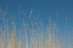 Grasses Stock Image