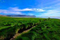 Grasses on shore