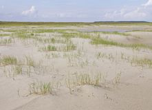 Grasses on the spacious beach of a Wadden island Stock Photo