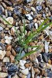 Grasses between stones Stock Photo