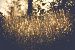 Grasses in sun Royalty Free Stock Photos