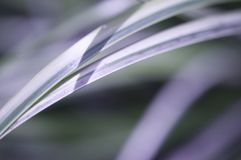 Grasses in  the sun Stock Photography