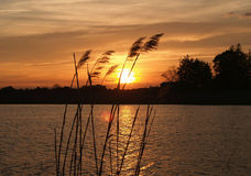 Grasses at sunset. Tall grass in silhouette against a sunset or sunrise over a small lake stock photos